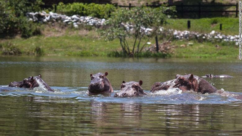The hippopotamus population has grown steadily and the animals have become a hazard, the study argues.