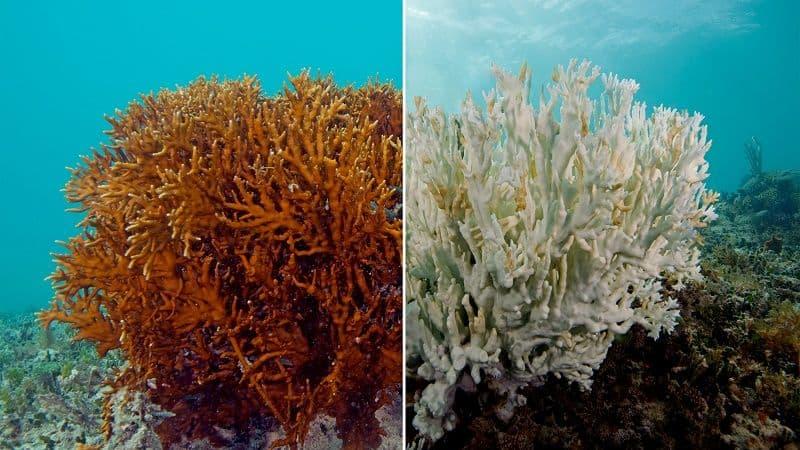 coral bleaching 7