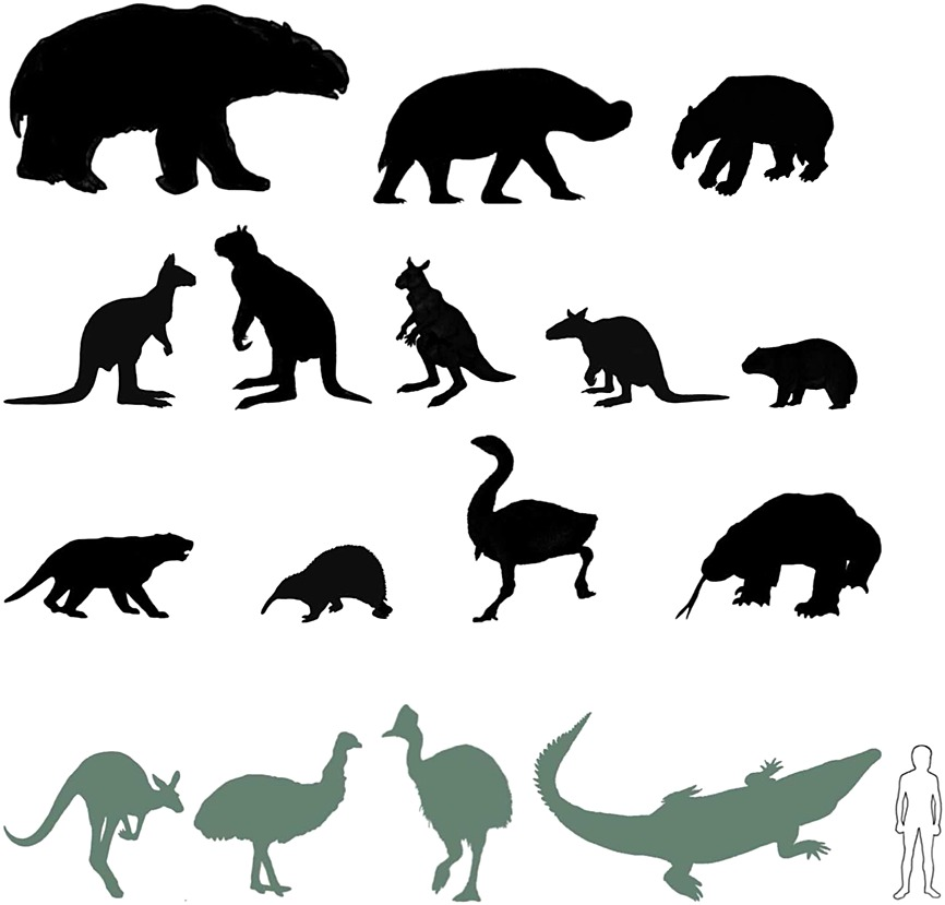 Late Quaternary megafaunal extinctions on the continents: a short ...